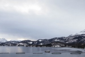 Veramaris' marine algal oil helps Norwegian farmer to produce sustainable raised salmon